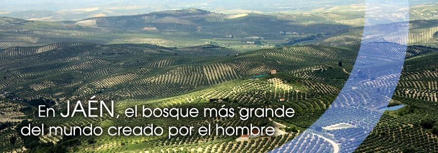 El bosque más grande del mundo, el Olivar de Jaén