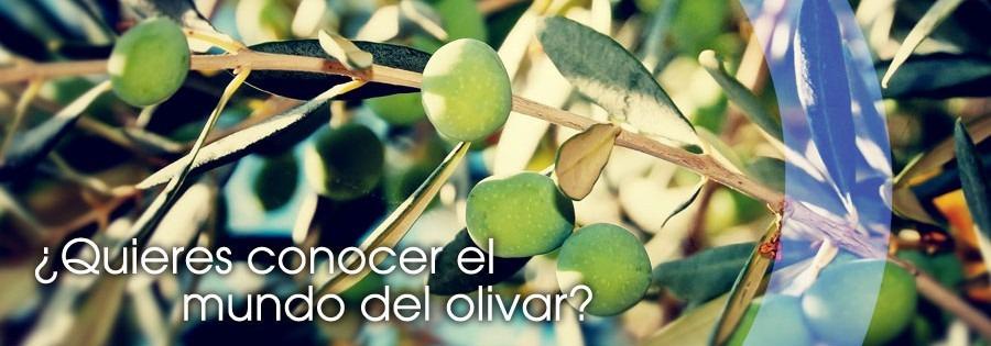 Cada olivar, cada aceite, una historia que contar
